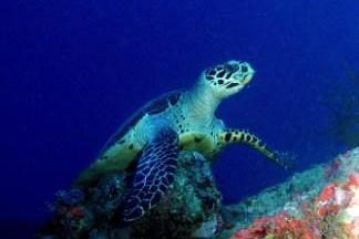 Turtle on the Aikoku Maru
