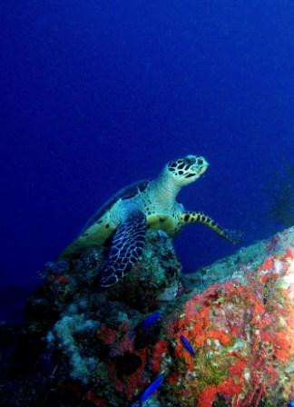 Turtle on the Aikoku Maru